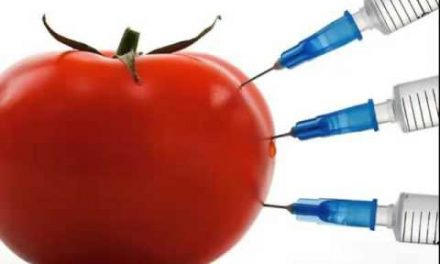 Why GMOs are a disaster in the making