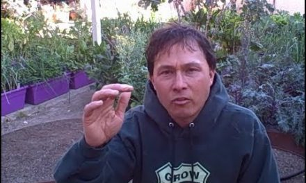 Police raid a passionate gardener