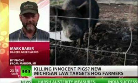 Authorities kill farm pigs in Michigan