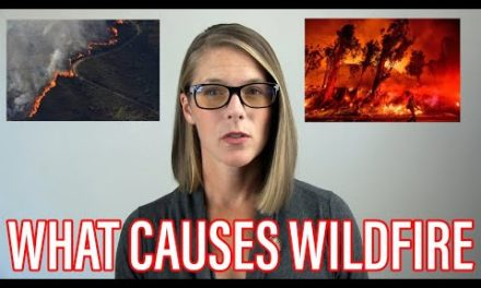 The cause of the wild fires
